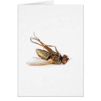 Dead fly greeting cards