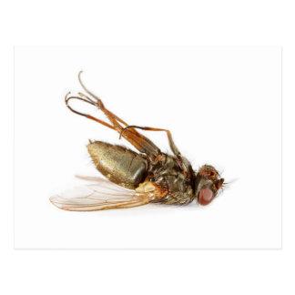 Dead fly post card
