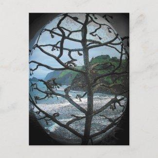 Dead Hawaiian Tree postcard