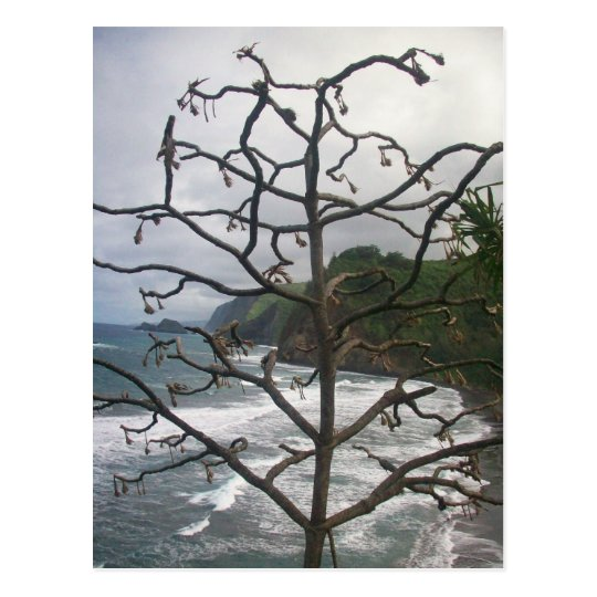 Dead Hawaiian Tree Postcard