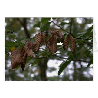 Dead leaves card
