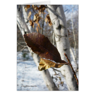 Dead Leaves in Birch Greeting Card