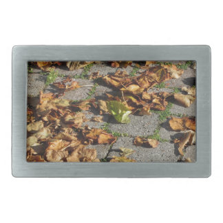 Dead leaves lying on the ground in the fall belt buckle