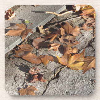Dead leaves lying on the ground in the fall beverage coaster