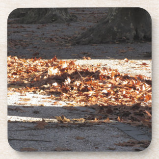 Dead leaves lying on the ground in the fall drink coaster