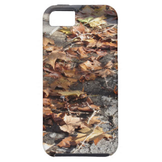 Dead leaves lying on the ground in the fall iPhone SE/5/5s case