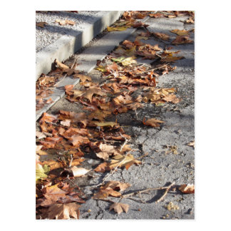 Dead leaves lying on the ground in the fall postcard