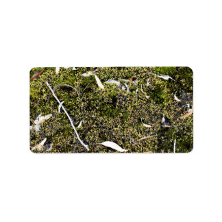 Dead leaves on the mossy ground address label