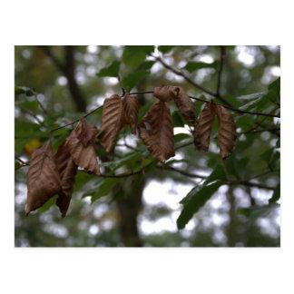 Dead leaves postcard