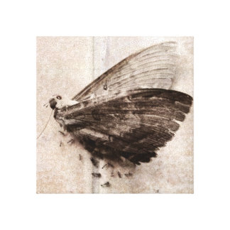 Dead Moth Being Eaten By Ants Canvas Print