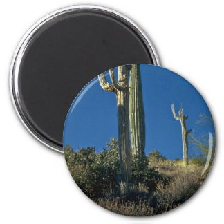 Dead Towers Fridge Magnets