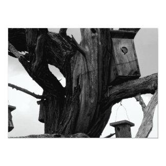 Dead Tree and Birdhouses Card