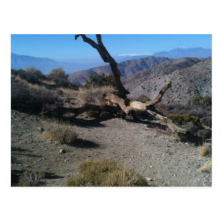dead tree at overlook postcard