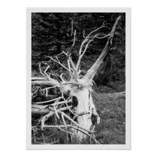 Dead Tree Black & White Print