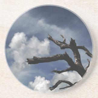 Dead tree coaster