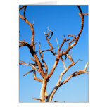 dead tree greeting cards