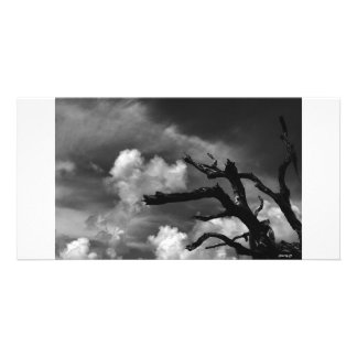Dead tree in black and white card