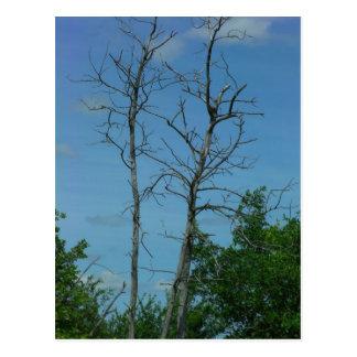 Dead Tree Postcard