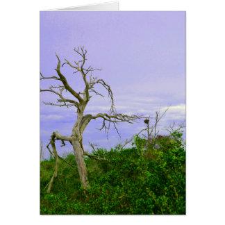 dead tree purple  green leaves sky sat card