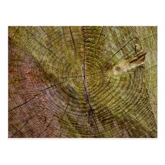 Dead tree rings postcard