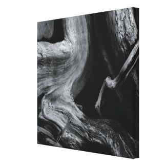 Dead tree trunk canvas print