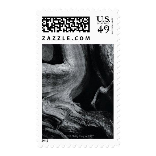Dead tree trunk postage