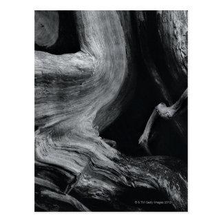 Dead tree trunk postcard