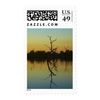 Dead trees reflected in Lily Creek Lagoon, dawn Postage Stamps