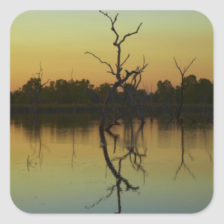 Dead trees reflected in Lily Creek Lagoon, dawn Square Sticker