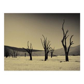 Dead Vlei en desert of landscape capa país Namib Tarjetas Postales