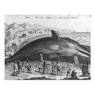 Dead whale postcard