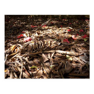 Dead wood and leaves on the forest floor. postcard