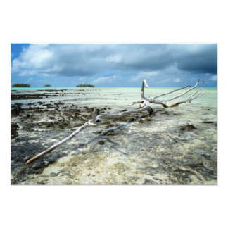 Dead wood in the Pacific Photo Print