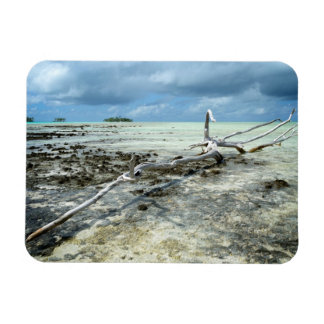 Dead wood in the Pacific rectangular magnet