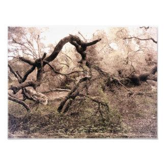 """""""Deadfall"""" 14 x impresión de encargo 11 por el mDa Foto"""