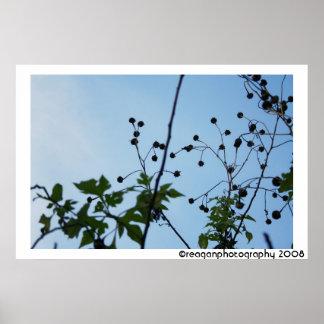 deadflowers, reaganphotography 2008 poster