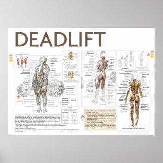 Deadlift Anatomy Exercise Instruction Gym Poster