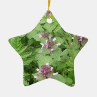Deadnettle púrpura/rojo adorno navideño de cerámica en forma de estrella