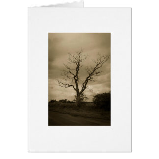 Deadwood Greeting Card