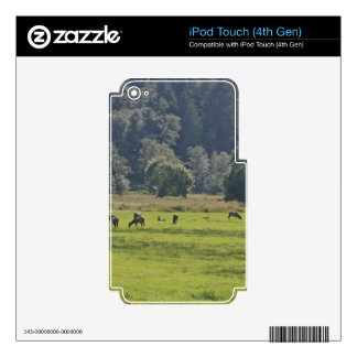 Dean Creek Elk, Oregon Decals For iPod Touch 4G