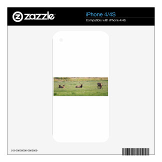 Dean Creek, Oregon Bull Elk Decal For The iPhone 4