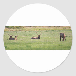 Dean Creek, Oregon Bull Elk Classic Round Sticker