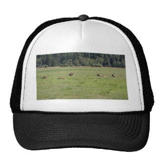 Dean Creek Roosevelt Elk Trucker Hat