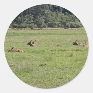 Dean Creek Roosevelt Elk Classic Round Sticker