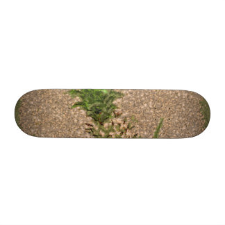 Dearly departed skate boards