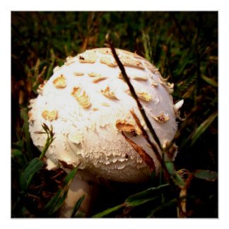 Death Angel Mushroom Poster
