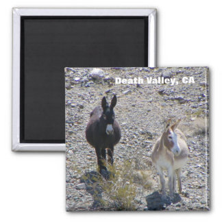 Death Valley Donkey Magnet! Magnet