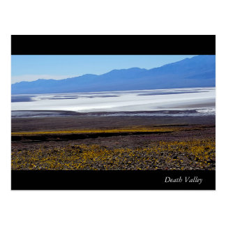 Death Valley Flowers Postcard