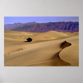 Death Valley sand dune Poster