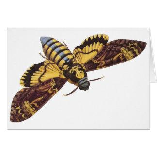 Death's Head Hawk Moth Greeting Cards